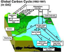 Click to learn about the carbon cycle.