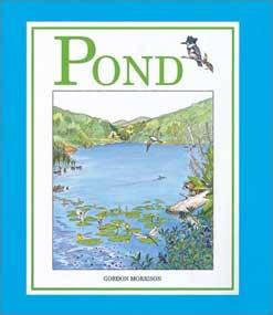 Virtual pond study for kids